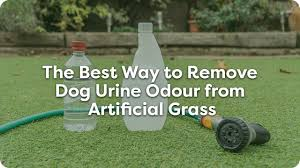 the best way to remove dog urine odour