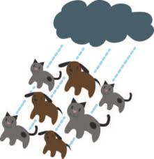 raining cats and dogs clipart.  Dogs Its Raining Cats And Dogs This Doggone Cute Design Will Be Purrfect On  Framed Embroidery On Raining Cats And Dogs Clipart T