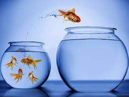 """Résultat de recherche d'images pour """"Sortir comme un poisson dans l'eau"""""""