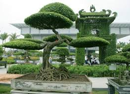 bonsai gardens. you will walk in many villages and visit bonsai gardens everywhere go. meeting with local people listen to their story. the afternoon, drive back