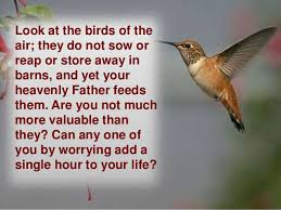 "Image result for ""Do not worry about your life. . . . Look at the birds of the air; they do not sow or reap or store away in barns, and yet your heavenly Father feeds them."