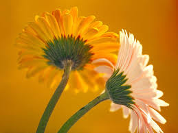 flower wallpapers free hd latest beautiful colorful images