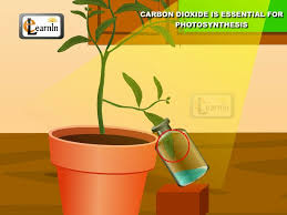 carbon dioxide is essential for photosynthesis proved with simple experiment science you