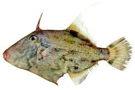 leather jacket fish images