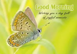 good morning es free