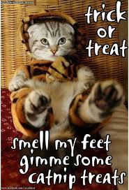 cute kittens in halloween costumes. Brilliant Halloween Kitten In A Tiggar Halloween Costume To Cute Kittens In Costumes U
