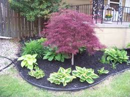Small Picture Best 20 Japanese maple ideas on Pinterest Maple tree Japanese