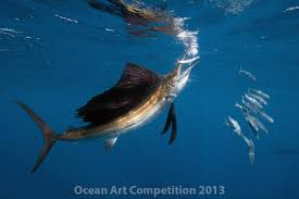 ocean art contest winners underwater photography guide marine life behavior