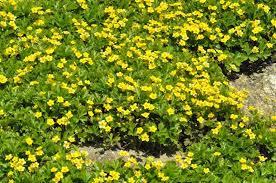Barren Strawberry Facts: Tips For Growing Barren Strawberries - Dummer. ゛☀  - Garden Manage - GFinger는 가장 전문적인 원예 APP입니다.