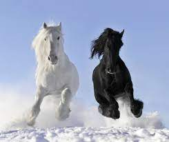 White and a black horse - Wallpaper