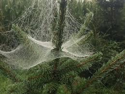 spider web, christmas tree | Pikist