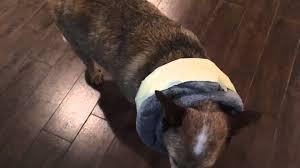 elizabethan collar alternative invigorate diy dog cone alternative e you 3