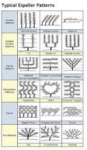 Vine Spacing Chart Chart Of Espalier Shapes Espalier Services Via Atticmag
