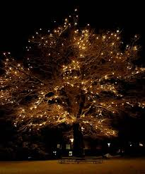 Image result for oak trees lit with fairy lights