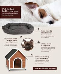 Dish it up. Keep your pet's ...