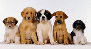 specialist insurance cover for ireland s dog breeders