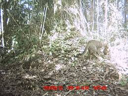 essays on wildlife conservation what does wildlife conservation  wild cam tws members what s eating lemurs in conservation wildcam lemurs 2