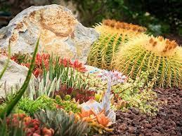7 best rocks for your succulent garden