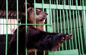 zoo animals in cages. Exellent Animals Intended Zoo Animals In Cages B