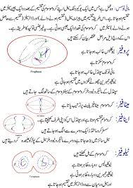 mitosis diagram in english and urdu online academy mitosis in urdu