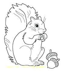 Squirrel Coloring Pages Trustbanksurinamecom