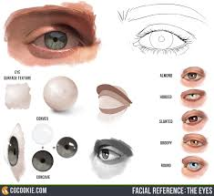 the eye reference cgcookie facialreference theeyes