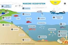 marine ecosystem  video clip and ecosystems projects on pinterestinteractive   marine ecosystem   explore this interactive diagram to learn more about life in the