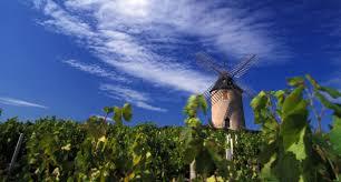 Visit the Beaujolais vineyards - wine tourism