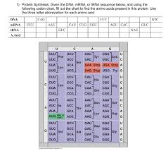 Dna Sequence Chart Solved 1 Protein Synthesis Given The Dna Mrna Or Trna