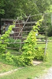 knoxville farm and garden golden hops honey rock herb farm in tn craigslist knoxville farm and knoxville farm and garden