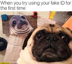 Dog You Your Seal The Pug For When Fake Id Using Time Try First com Starecat