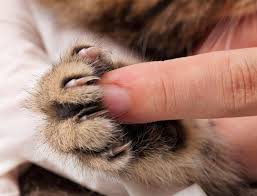 start handling and also pressing the paws to extend the nail as very early as possible