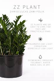 House Plants Low Light Requirements Master List Of Low Light Indoor Plants Plants Indoor