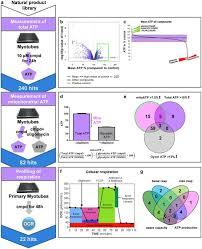 High Throughput Screening Of Mitochondrial Bioenergetics In Human
