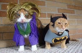 5 batcat joker kitten