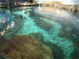 salt water pool with fish. Saltwater Monster Pool Salt Water Pool With Fish I