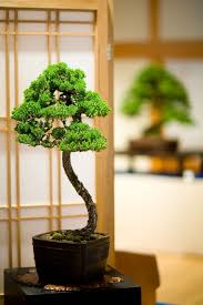 Excellent <b>bonsai</b> tree in an exhibit. Add a <b>bonsai</b> tree to your <b>home</b> ...