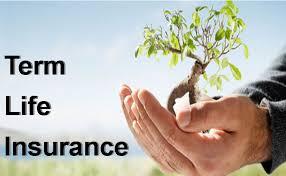 term life insurance banner