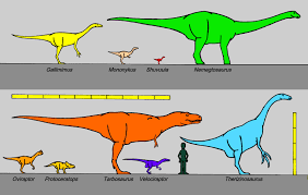 Velociraptor Size Chart Perfect Size Of A Velociraptor Pictures Quality Images On