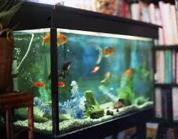 Unique and Innovative Home Aquarium Ideas - Decoration Channel