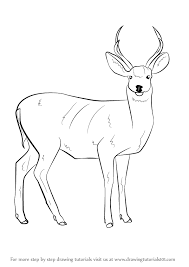 596x842 learn how to draw a mule deer wild s step by step
