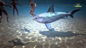 shark funny moments shark pilation video kids car videos