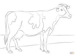 Holstein Koe Kleurplaat Gratis Kleurplaten Printen Kleurplaat