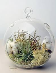 Intriguing Terrarium Plants In Spherical Glass Hanging Terrarium