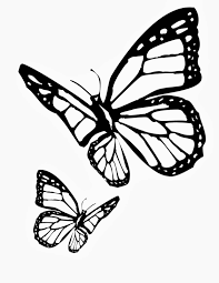 Two Butterfly Dark Coloring For Kids
