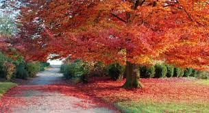 fall-pc-autumn-wallpaper