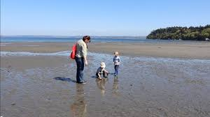 Dash Point Wa Tide Chart Beach Combing At Dash Point State Park