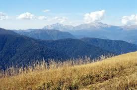 Природа растения и животные Северного Кавказа Климат на Северном Кавказе