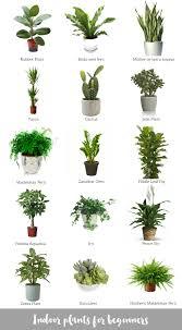 best indoor plants for office. Indoor Plants For Beginners Best Office L