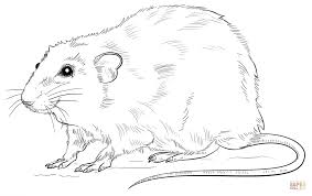 Small Picture Realistic Rat coloring page Free Printable Coloring Pages